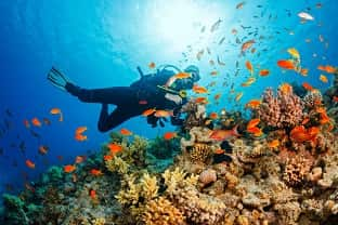scuba diving+ water sports