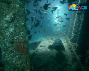 suzy's wreck one of the best spot for scuba diving